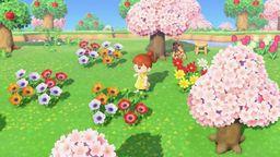《集合啦!动物森友会》花卉杂交攻略 花卉杂交方法