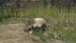 《怪物猎人 崛起》拍摄释放气体狸兽方法 狸兽怎么释放气体