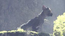 《最后的守护者》巨鹰指令攻略 大鹫指令都有什么用