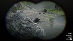 《荒野大镖客2》全动物列表 荒野大镖客2动物都有哪些