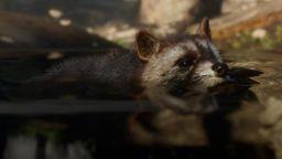 《荒野大镖客2》放出更多动物图片 浣熊美国猫鳄鱼登场