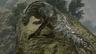 《怪物猎人 崛起》公开《怪物猎人 世界》部分怪物登场动画