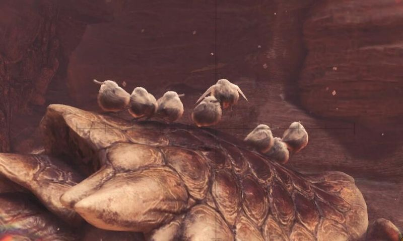 一起捕捉梦幻之鸟 《怪物猎人世界》柔毛秧鸡布偶实物图公开
