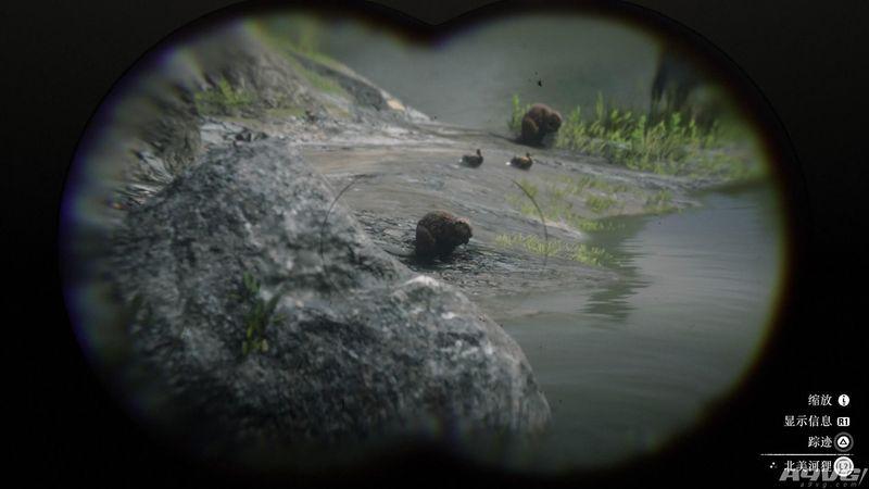 荒野大镖客2古巴陆蟹图片