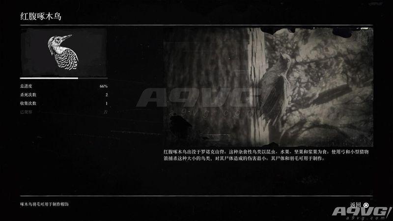 《荒野大镖客2》松鼠标本位置攻略 一门艺术奖杯解法介绍